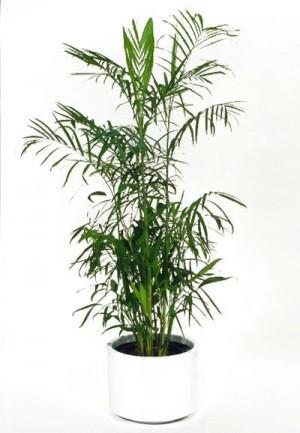 5 piante che purificano l 39 aria di casa e ufficio - Piante che purificano l aria in casa ...