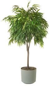 Le 5 piante pi efficaci per la purificazione dell 39 aria - Piante da interno purifica aria ...