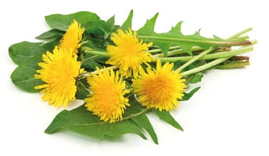 Depurarsi con il tarassaco: un'erba e molte virtù