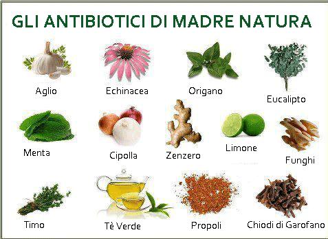 Antibiotici naturali: aglio ed echinacea per malanni stagionali