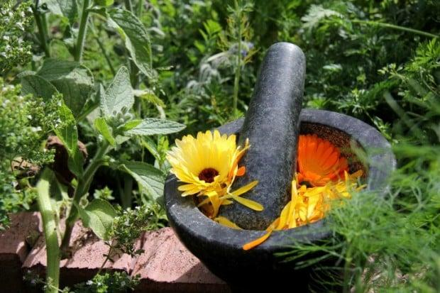 Le erbe dimagranti e depurative