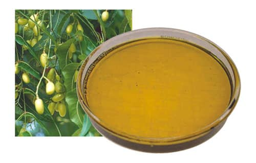 Olio di neem contro la forfora secca