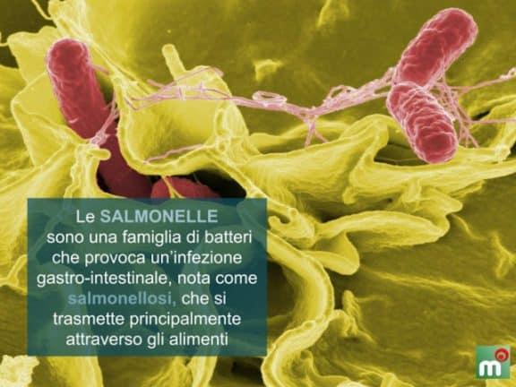 salmonella sintomi
