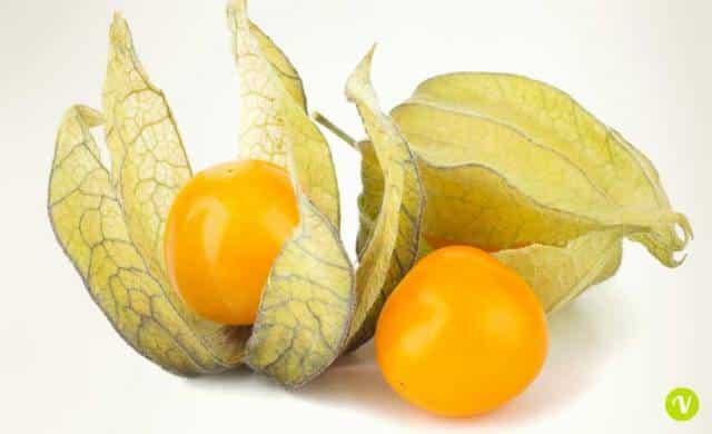 Alchechengi proprietà del frutto e coltivazione