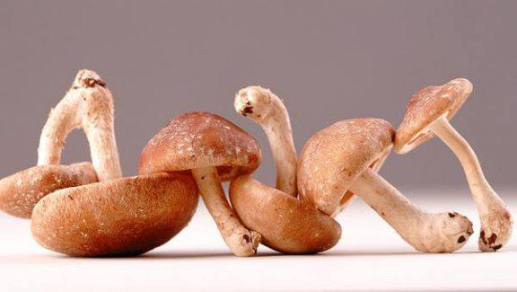 Funghi Shiitake dove si comprano
