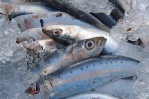 Anisakis sintomi da pesce crudo e in quali si trova?