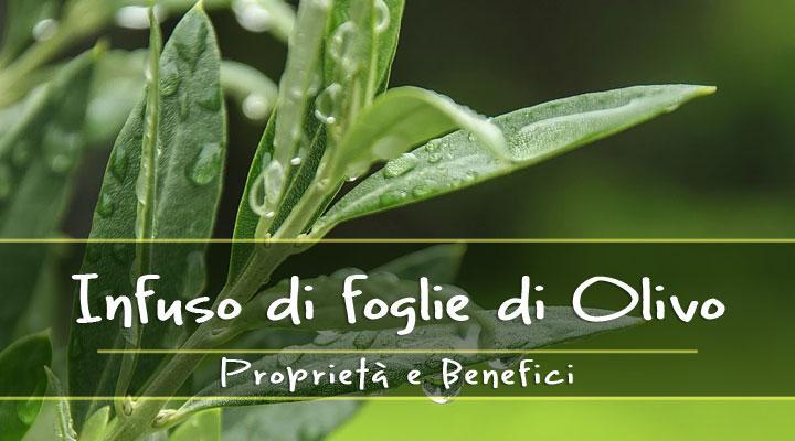 Infuso di foglie di ulivo