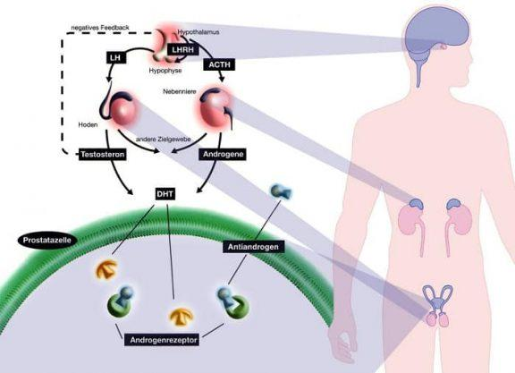 testosterone basso sintomi