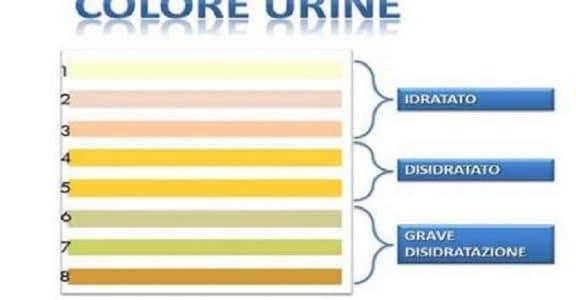 Urine scure