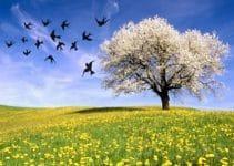 primo giorno di primavera