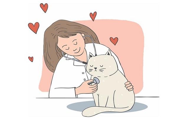 Fermenti lattici per gatti