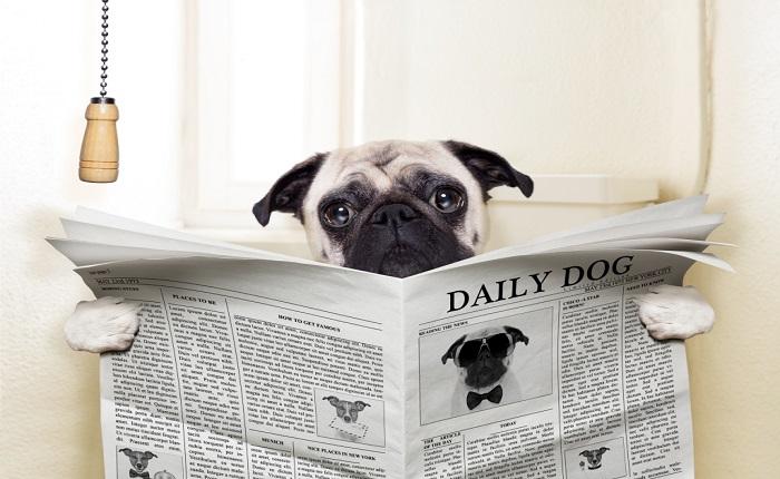 diarrea cani rimedi e farmaco